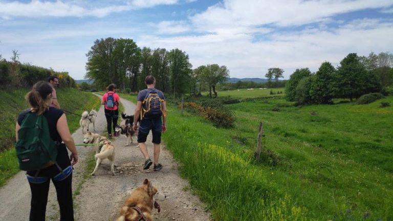 randonnée,chiens,nature,creuse,limousin,huskincreuse